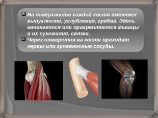 На поверхности каждой кости имеются выпуклости, углубления, гребни. Здесь нач