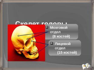 Скелет головы - череп Мозговой отдел (8 костей) Лицевой отдел (15 костей)