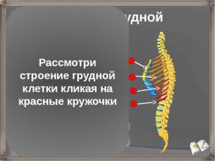 Строение грудной клетки Грудина Истинные ребра (7 пар) присоединяются непоср
