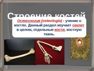 Строение костей Остеология (osteologia) - учение о костях. Данный раздел изуч