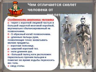 Чем отличается скелет человека от скелета животных? Особенности анатомии чело