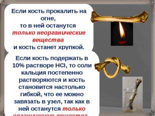 Если кость прокалить на огне, то в ней останутся только неорганические вещест