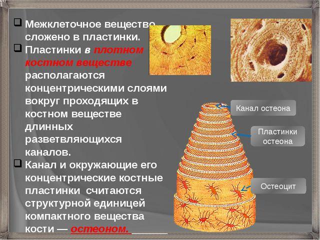 Межклеточное вещество сложено в пластинки. Пластинки в плотном костном вещест...