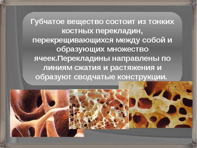 Губчатое вещество состоит из тонких костных перекладин, перекрещивающихся меж...