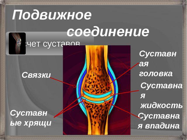 Подвижное соединение Суставная головка Суставная жидкость Суставная впадина С...