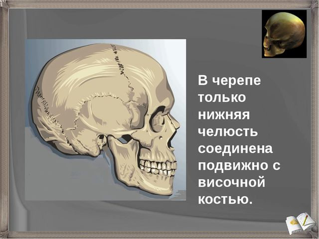 В черепе только нижняя челюсть соединена подвижно c височной костью.