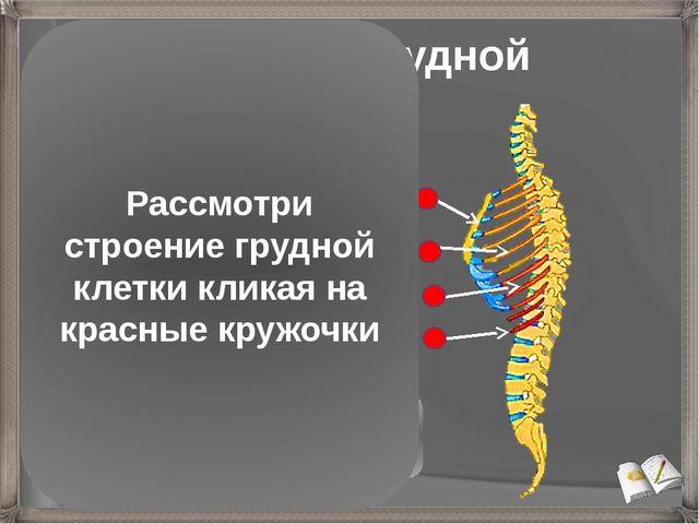 Строение грудной клетки Грудина Истинные ребра (7 пар) присоединяются непоср...