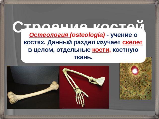 Строение костей Остеология (osteologia) - учение о костях. Данный раздел изуч...