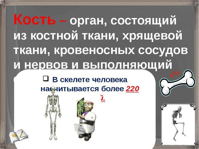 Кость – орган, состоящий из костной ткани, хрящевой ткани, кровеносных сосудо...
