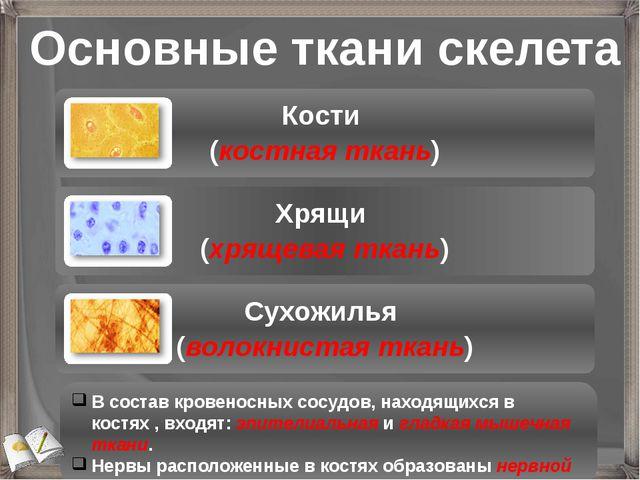 Основные ткани скелета В состав кровеносных сосудов, находящихся в костях , в...