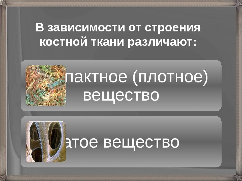 В зависимости от строения костной ткани различают: