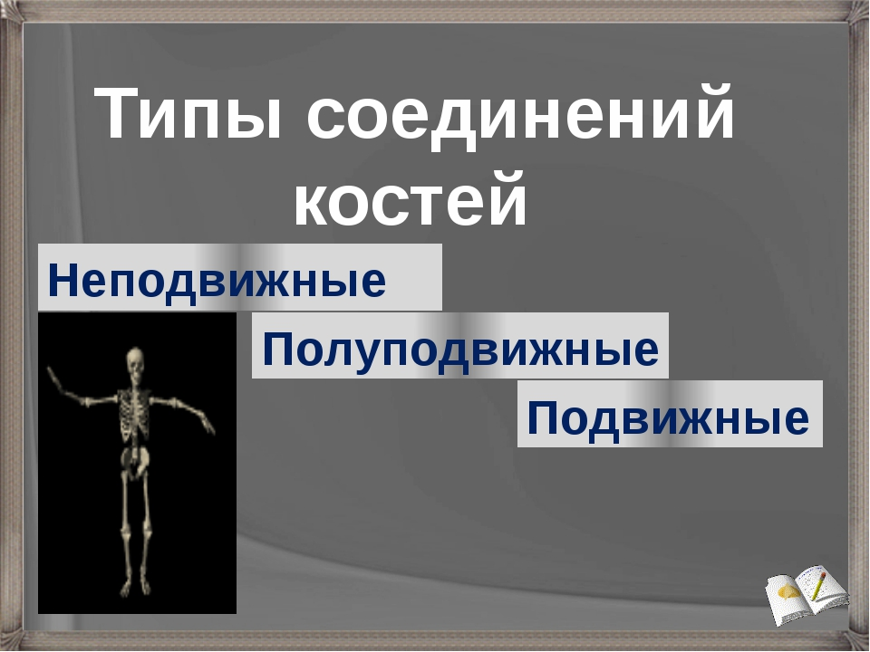 Типы соединений костей Неподвижные Подвижные Полуподвижные