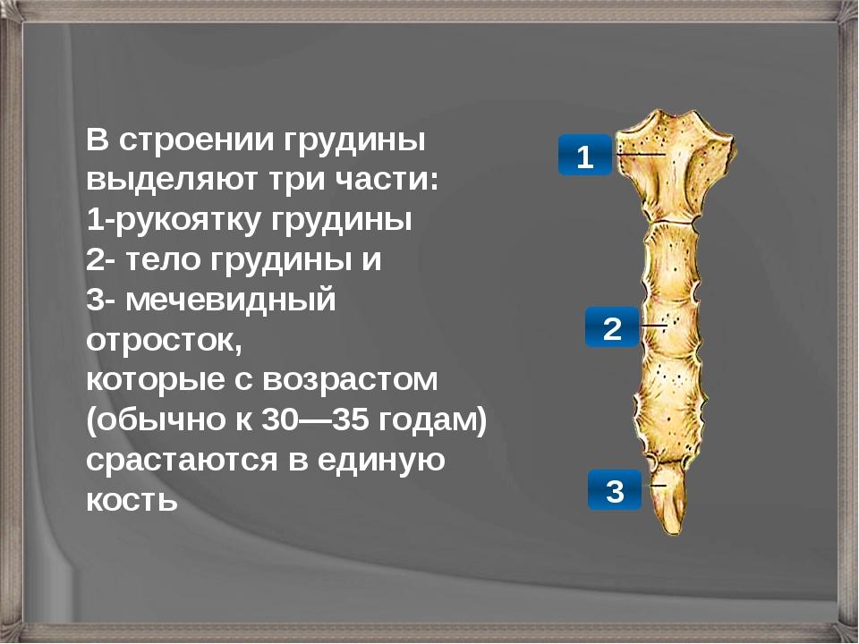 В строении грудины выделяют три части: 1-рукоятку грудины 2- тело грудины и 3...