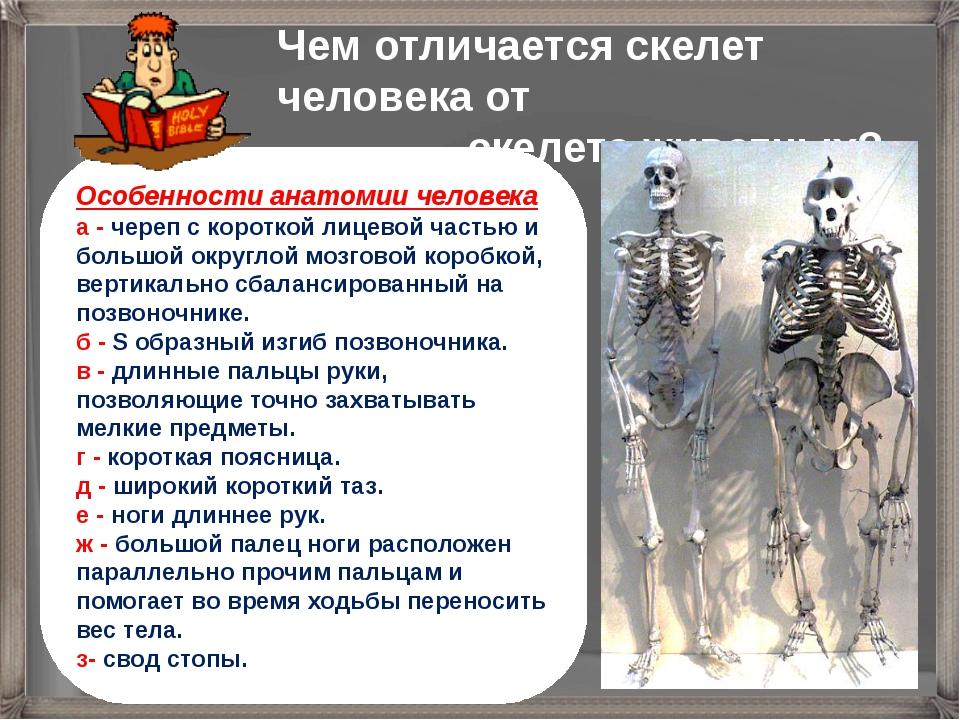 Чем отличается скелет человека от скелета животных? Особенности анатомии чело...
