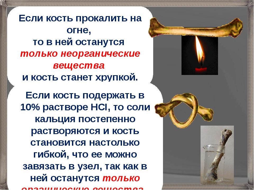 Если кость прокалить на огне, то в ней останутся только неорганические вещест...