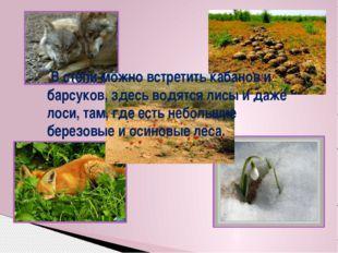 В степи можно встретить кабанов и барсуков, здесь водятся лисы и даже лоси,