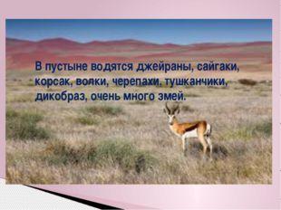 В пустыне водятся джейраны, сайгаки, корсак, волки, черепахи, тушканчики, дик