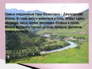 Самые оледенелые горы Казахстана – Джунгарский Алатау. В горах много животных