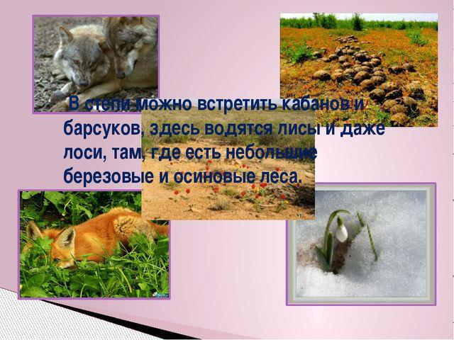 В степи можно встретить кабанов и барсуков, здесь водятся лисы и даже лоси,...