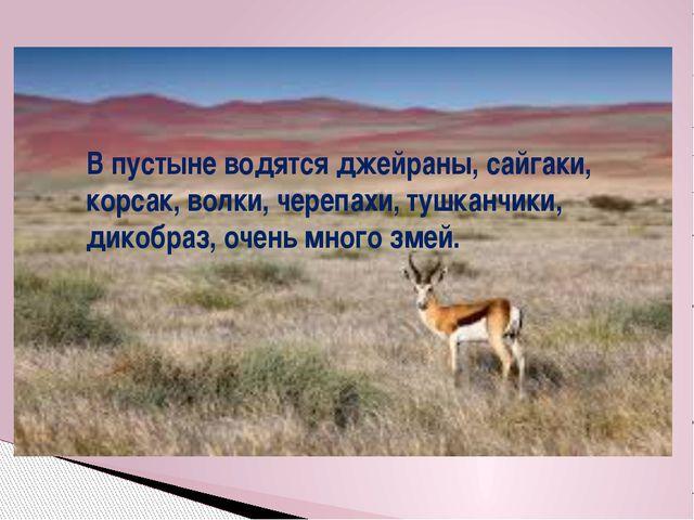 В пустыне водятся джейраны, сайгаки, корсак, волки, черепахи, тушканчики, дик...