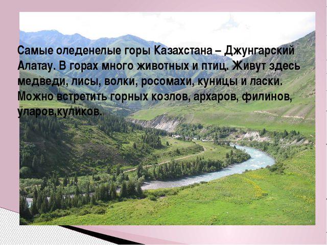 Самые оледенелые горы Казахстана – Джунгарский Алатау. В горах много животных...