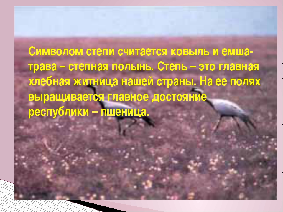Символом степи считается ковыль и емша-трава – степная полынь. Степь – это гл...