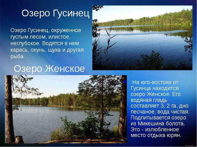 Озеро Гусинец Озеро Гусинец, окруженное густым лесом, илистое, неглубокое. Во...