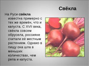 Свёкла На Руси свёкла известна примерно с тех же времён, что и капуста. С XVI