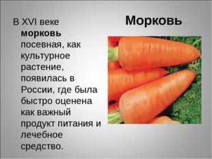 Морковь В ХVІ веке морковь посевная, как культурное растение, появилась в Рос