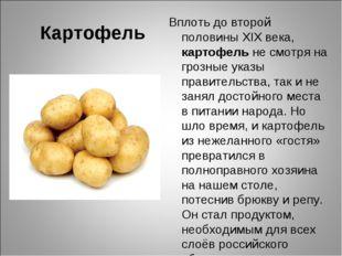 Картофель Вплоть до второй половины XIX века, картофель не смотря на грозные