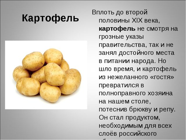 Картофель Вплоть до второй половины XIX века, картофель не смотря на грозные...