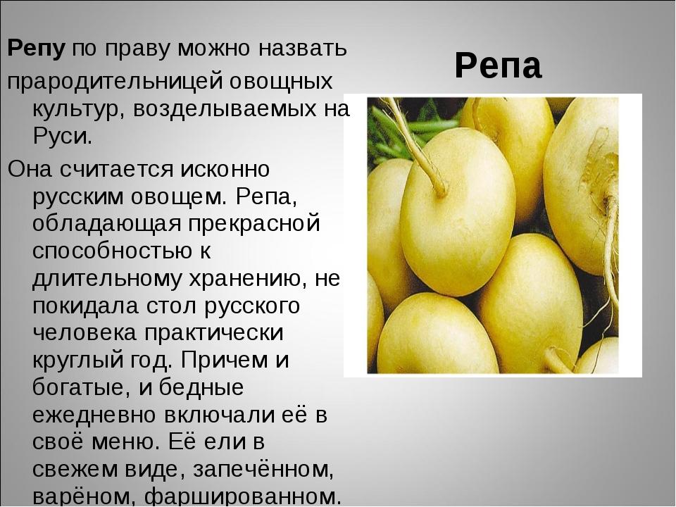 Репа Репу по праву можно назвать прародительницей овощных культур, возделывае...