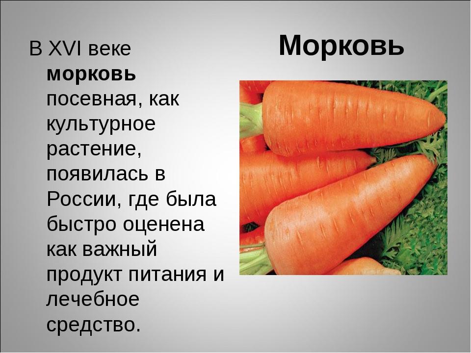 Морковь В ХVІ веке морковь посевная, как культурное растение, появилась в Рос...
