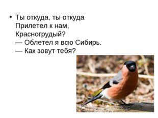 Ты откуда, ты откуда Прилетел к нам, Красногрудый? — Облетел я всю Сибирь.