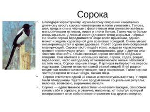 Сорока Благодаря характерному черно-белому оперению и необычно длинному хвост