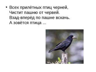 Всех прилётных птиц черней, Чистит пашню от червей. Взад-вперёд по пашне вс