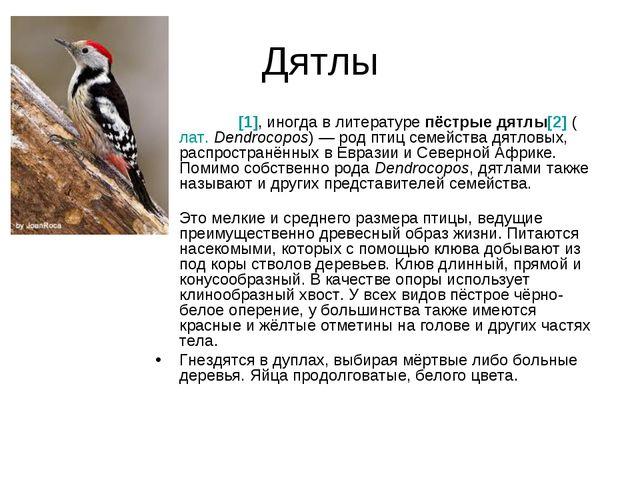 Дятлы Дя́тлы[1], иногда в литературепёстрые дятлы[2](лат.Dendrocopos)— ро...