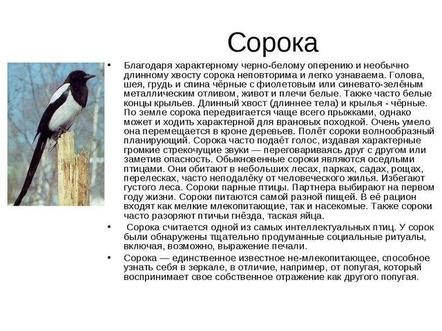 Сорока Благодаря характерному черно-белому оперению и необычно длинному хвост...