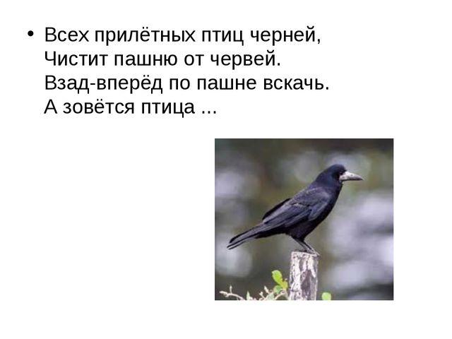 Всех прилётных птиц черней, Чистит пашню от червей. Взад-вперёд по пашне вс...