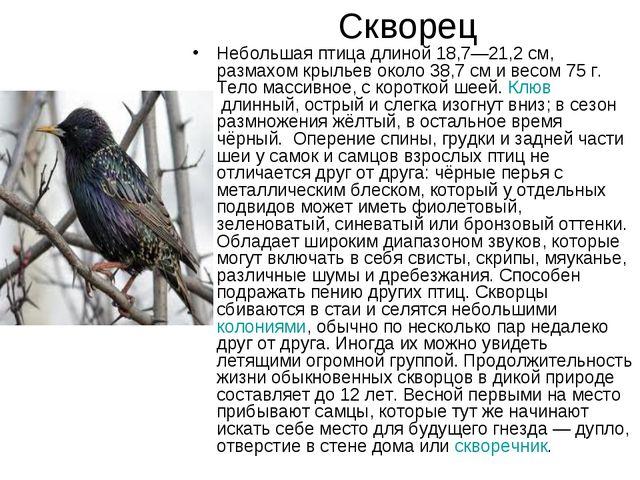 Скворец Небольшая птица длиной 18,7—21,2 см, размахом крыльев около 38,7 сми...