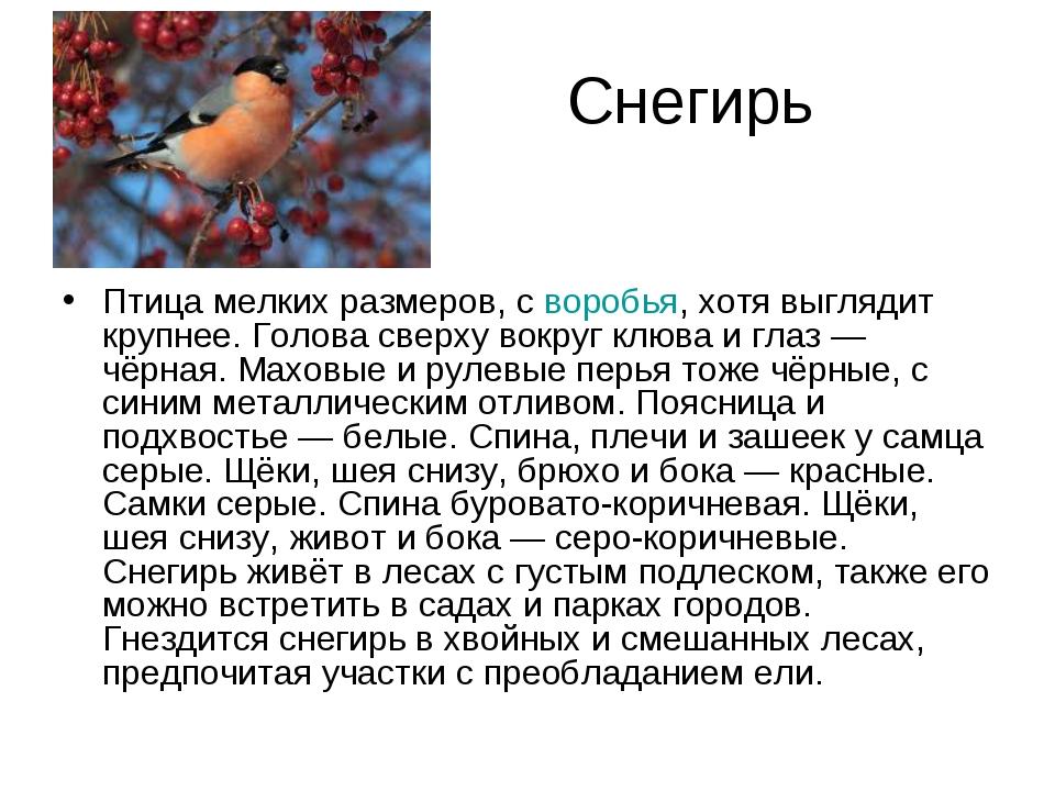 Снегирь Птица мелких размеров, своробья, хотя выглядит крупнее. Голова сверх...
