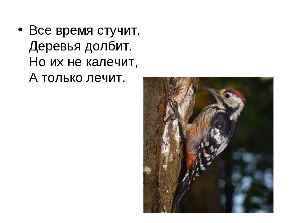 Все время стучит, Деревья долбит. Но их не калечит, А только лечит.