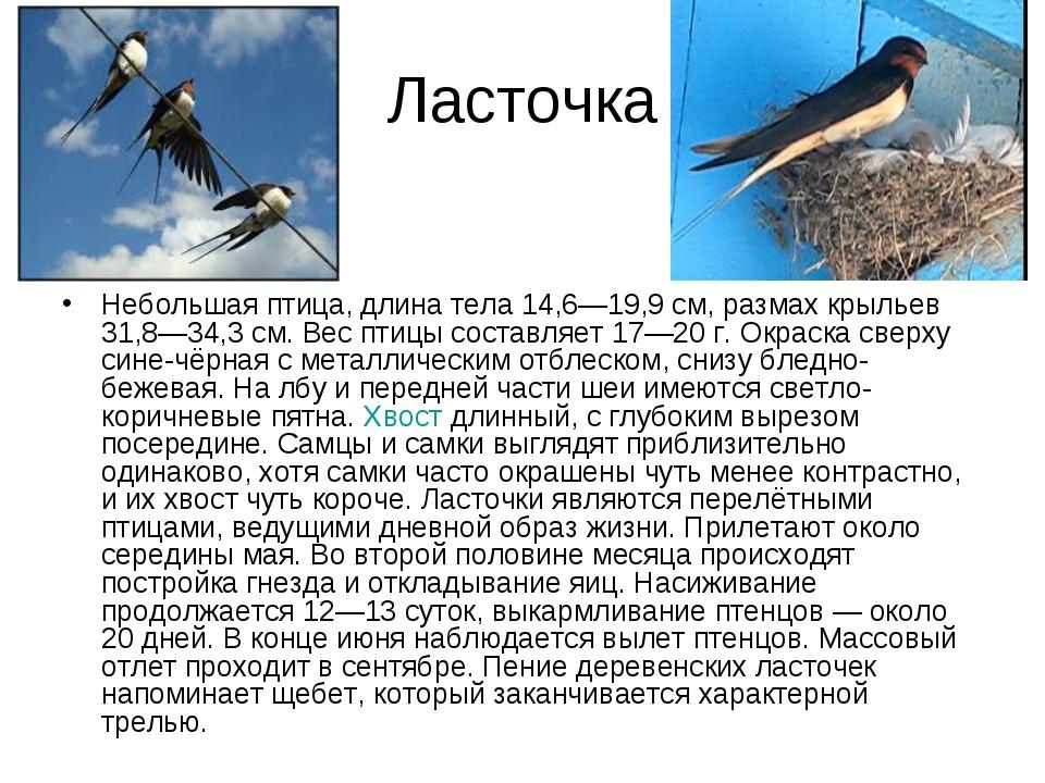 Ласточка Небольшая птица, длина тела 14,6—19,9 см, размах крыльев 31,8—34,3 с...