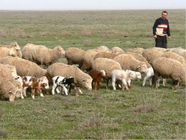 В Молдове разводят коров, овец, свиней, кроликов, домашнюю птицу