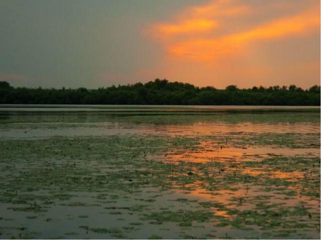 Внутренние воды Самые крупные реки Днестр и Прут. В речных долинах много пойм...