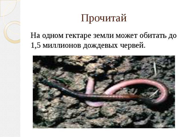 Прочитай На одном гектаре земли может обитать до 1,5 миллионов дождевых червей.