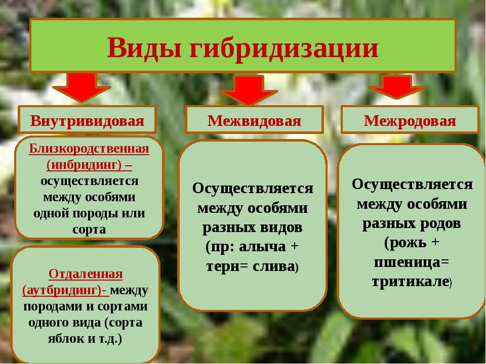 Какие бывают виды скрещивание растений фото