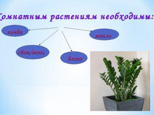 Комнатным растениям необходимы:
