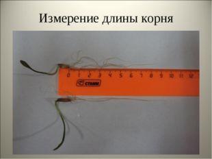 Измерение длины корня