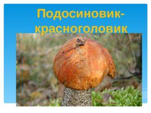 Подосиновик-красноголовик